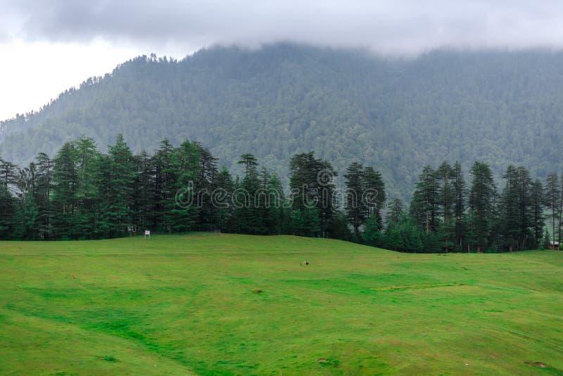 Green Meadow Surrounded by Deodar Tree in Himalayas, Sainj Valley, Shahgarh, Himachal Pradesh, India. Panoramic View of Green Meadow Surrounded by Deodar Tree in royalty free stock photo