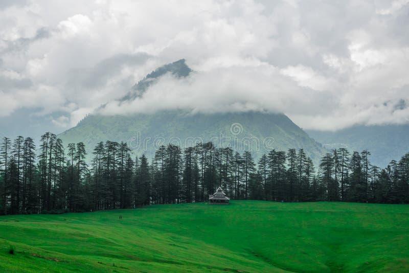 Green Meadow Surrounded by Deodar Tree in Himalayas, Sainj Valley, Shahgarh, Himachal Pradesh, India. Panoramic View of Green Meadow Surrounded by Deodar Tree in stock photos
