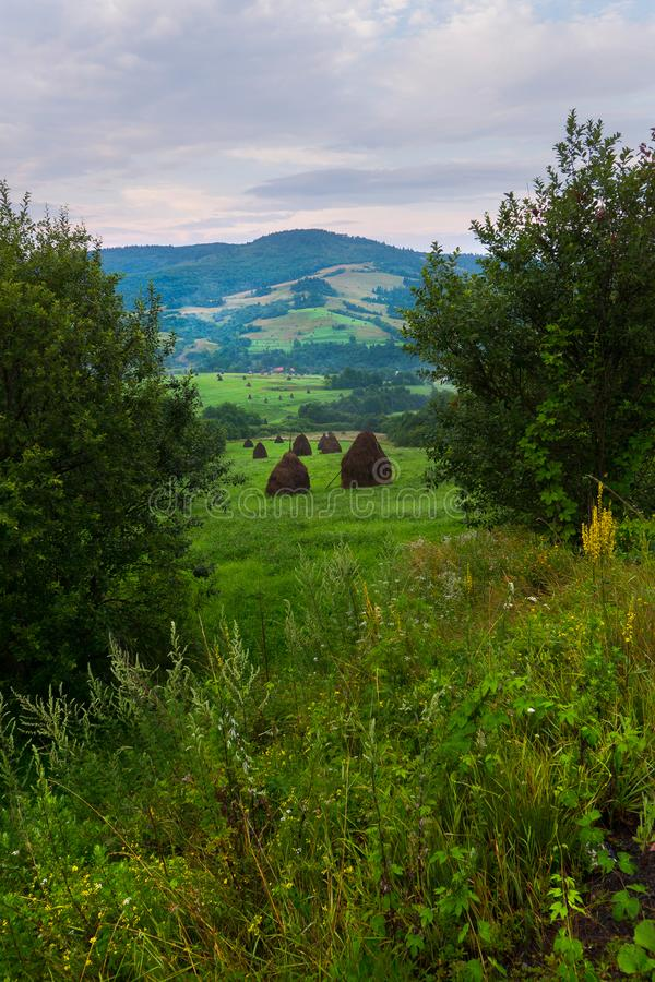 Green meadow among the trees with haystacks on the mountainside and against the background of the cloudy sky. place for royalty free stock images