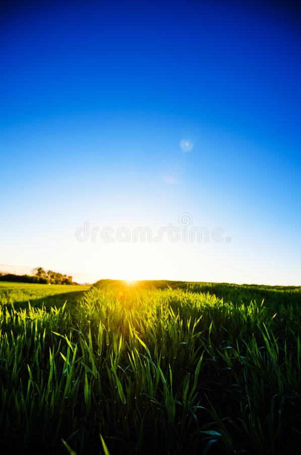 Green meadow under blue sky with clouds. Beautiful Nature Sunset Landscape. Fresh seasonal background. Ecology concept. Beauty. World, evening, yellow, sunrise royalty free stock image