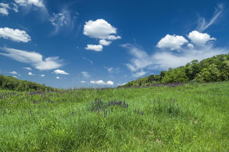 Green meadow under blue sky with clouds, nature background. Green meadow under blue sky with clouds. Beautiful summer country landscape. Purple meadow flowers stock photos