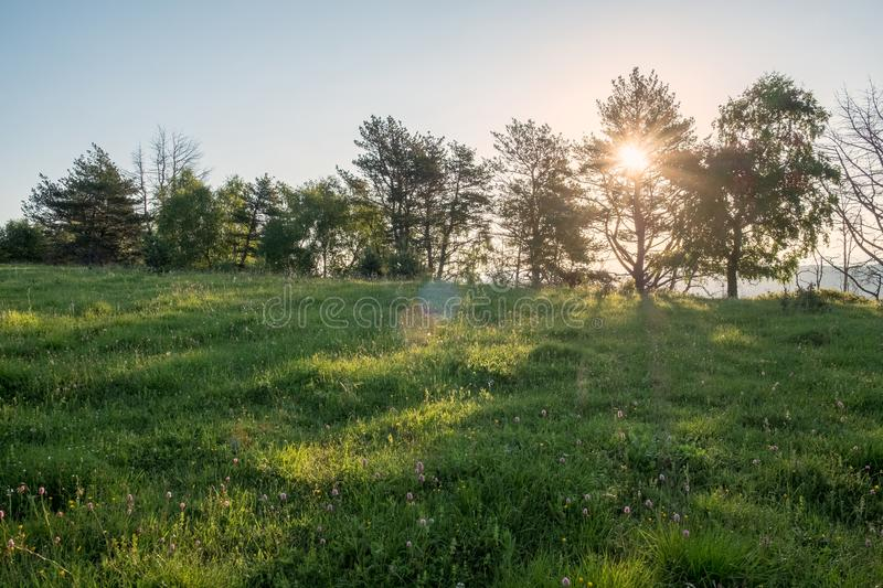 Green meadow through which the sun shines with rays and blue sky, space for text royalty free stock photos