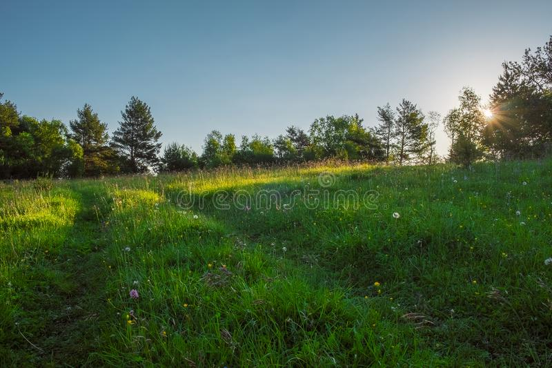 Green meadow through which the sun shines with rays and blue sky, space for text royalty free stock photography
