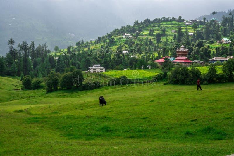 Green meadows in himalayas, Great Himalayan National Park, Sainj Valley, Himachal Pradesh, India. Panoramic view of green meadows in himalayas, Great Himalayan royalty free stock image