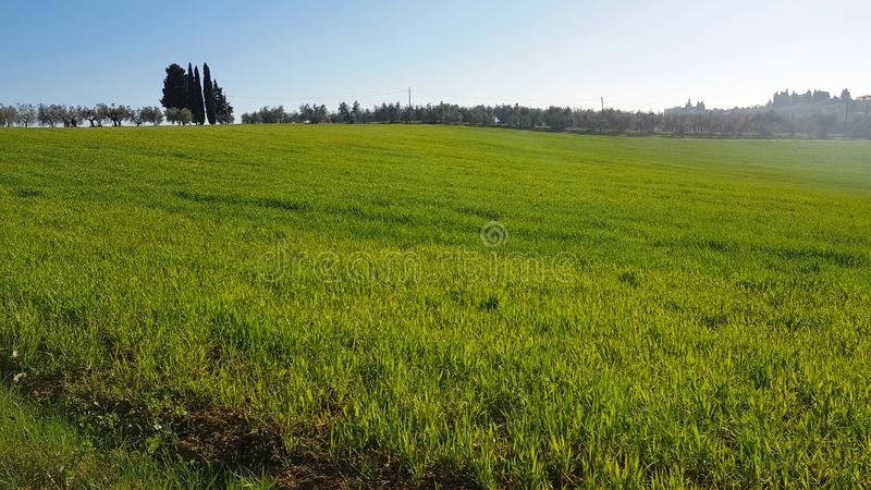 Tuscan countryside: Green meadows in spring with cypresses and olive trees royalty free stock images