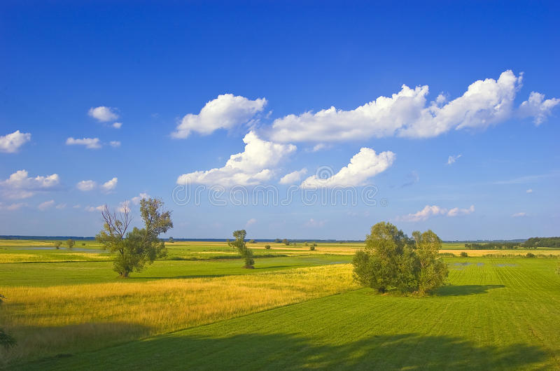 Green meadows and yellow fields stock images