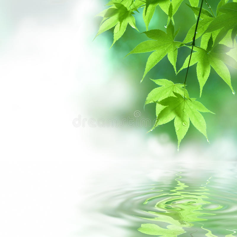 Green meditation. The leaf with the water reflection royalty free stock photo