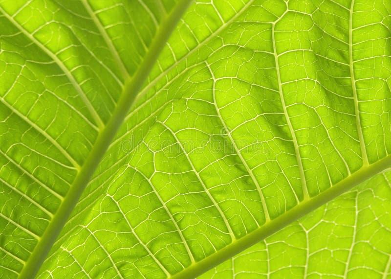 green mig leaves royaltyfri foto