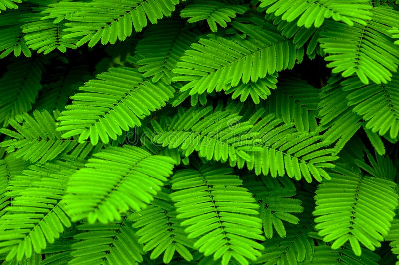 Green mini leaf tone in natue for background stock image