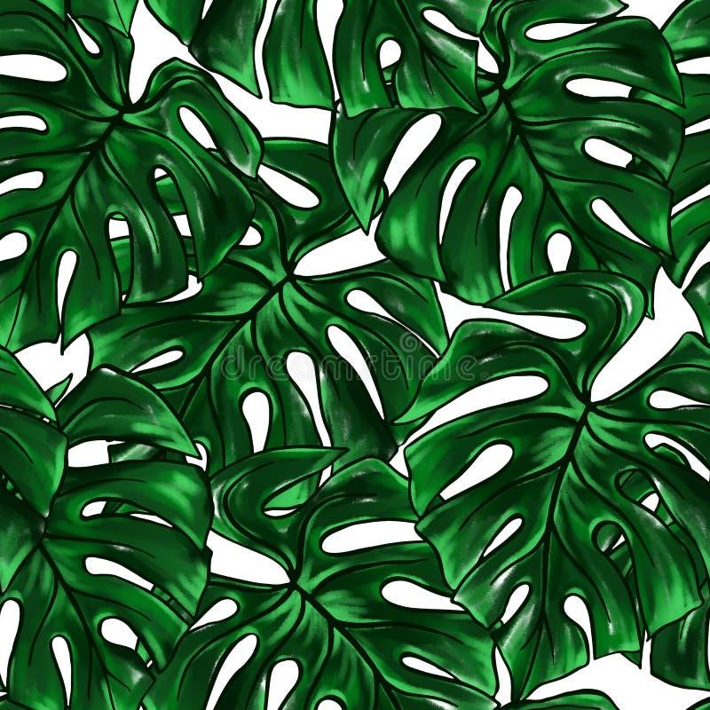 Zz Plant Illustration