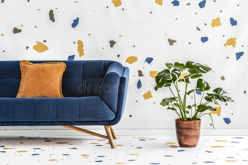Green monstera plant next to a dark blue sofa with an orange pillow in a white living room interior with lastrico wallpaper. Real royalty free stock images