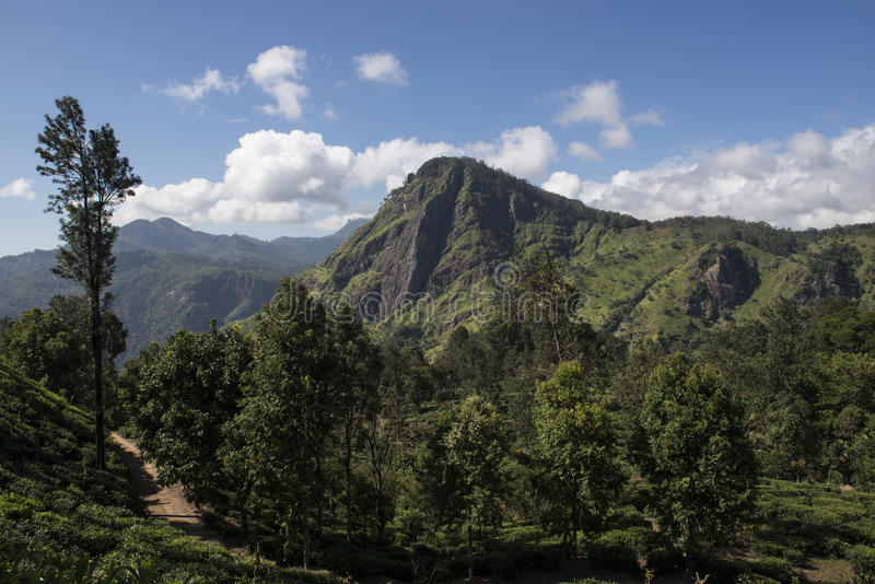 Green montains with tea plantations Ella, Sri Lanka. Green montains with path into tea plantations. Ella, Sri Lanka royalty free stock photography