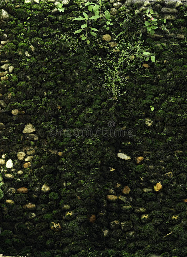 Download Green moss stock photo. Image of spring, ecology, forest - 14422650