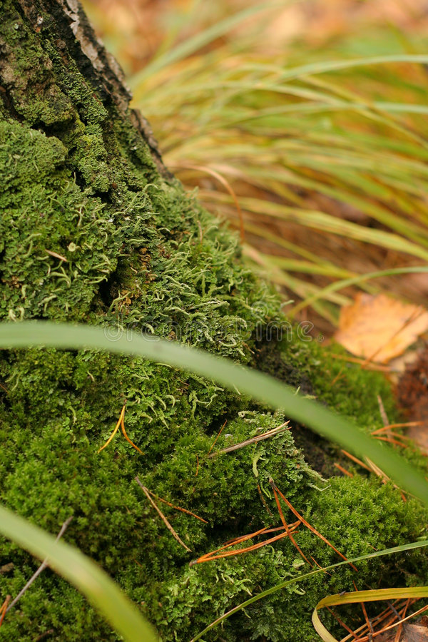 Free Green Moss Royalty Free Stock Image - 1597866