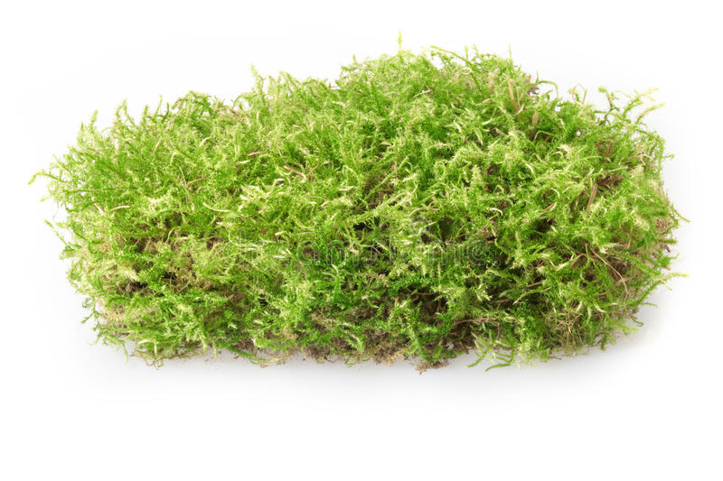 Download Green moss stock photo. Image of detail, organic, environment - 21167070