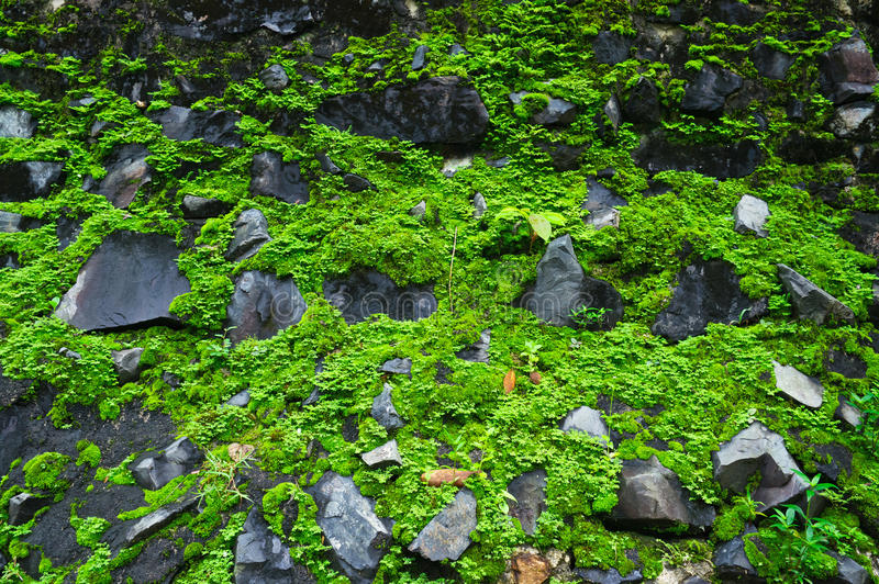 Download Green moss background stock image. Image of lichen, rocks - 26056911