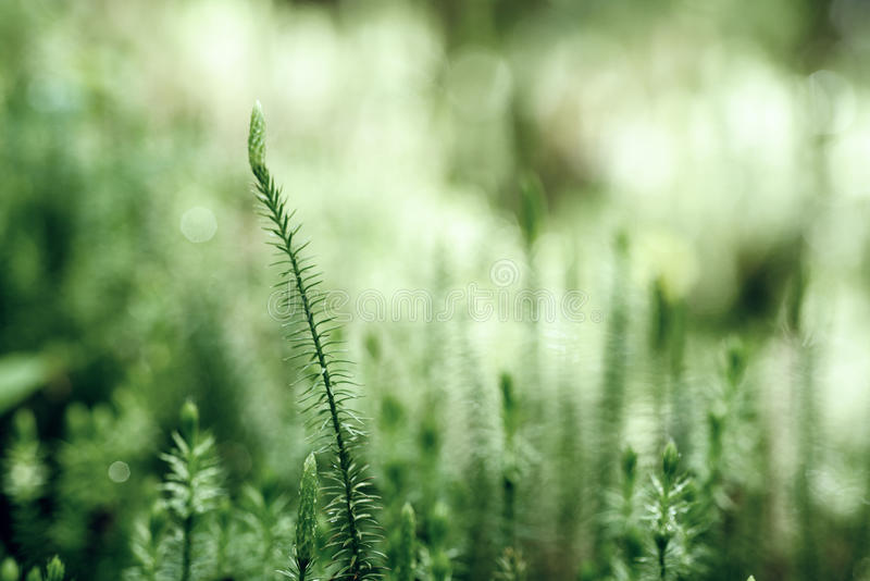 Download Green Moss Background Stock Photo - Image: 83709146