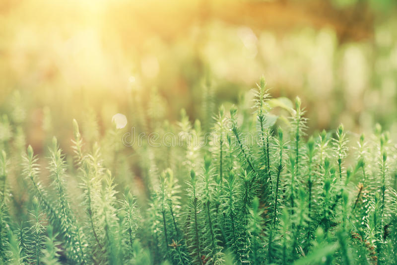 Download Green Moss Background Stock Photo - Image: 83707952