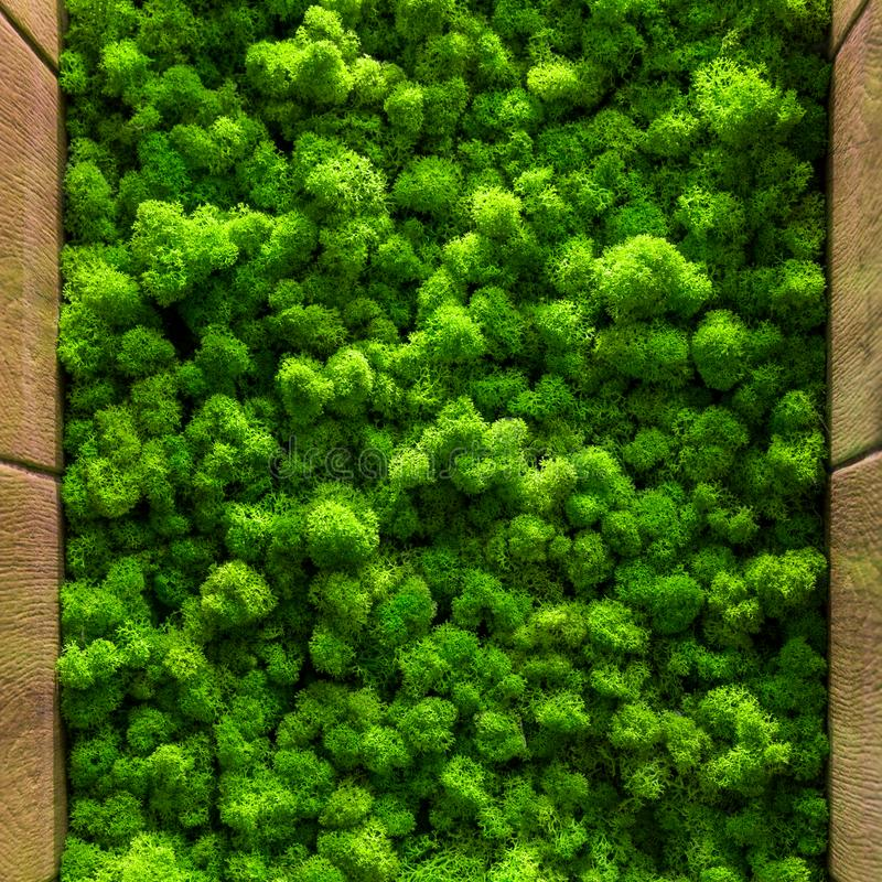 Green moss background texture close up Top view interior design.  stock images