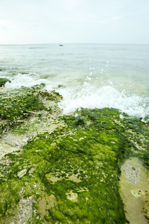 Download Green moss on beach stock image. Image of reflection - 37637219