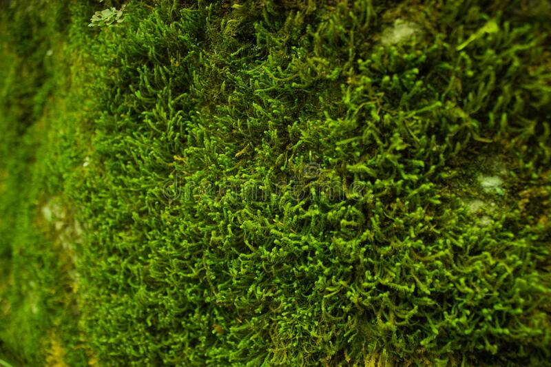 Green Moss Close Up Free Public Domain Cc0 Image