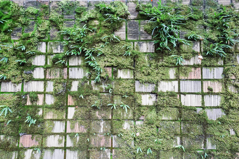 Green moss on concrete wall stock image