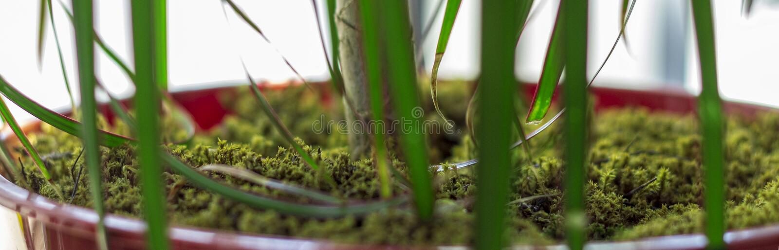 Green moss covered flower pot. Green moss-covered pots create a more natural environment in interiors. You may add moss your pot during home decatoration stock image