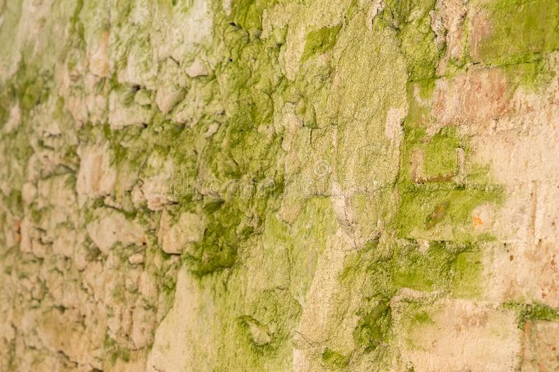 Green moss covered the old red brick wall, natural background royalty free stock photography