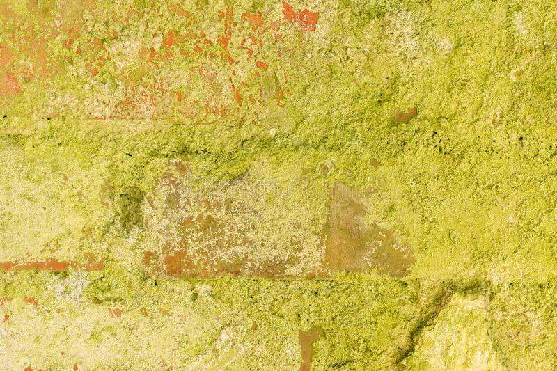Green moss covered the old red brick wall, natural background stock image