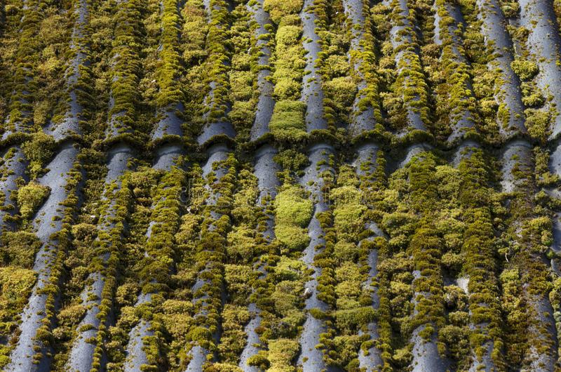 Green moss-covered old slate roof royalty free stock images