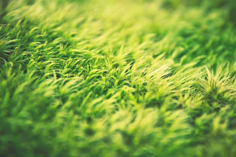 Green moss field stock photo