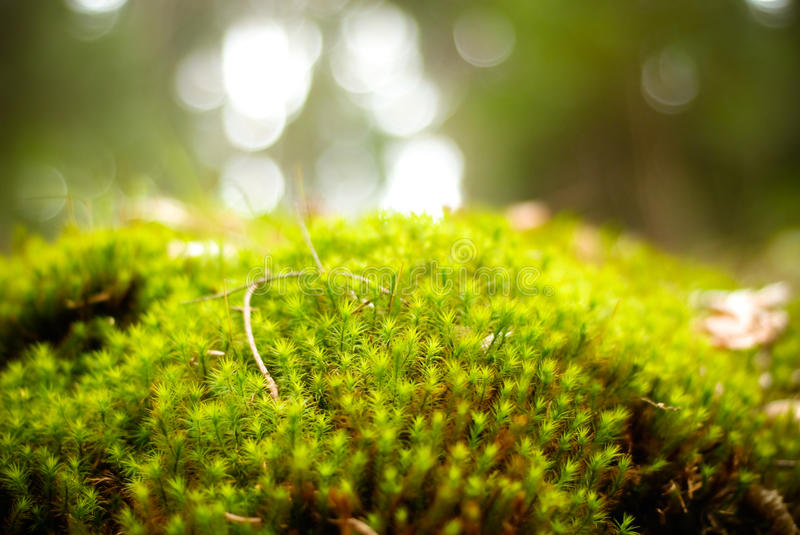 Green moss forest stock images