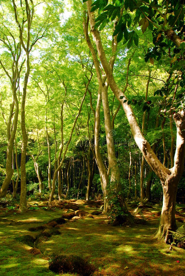 Green moss forest stock photography