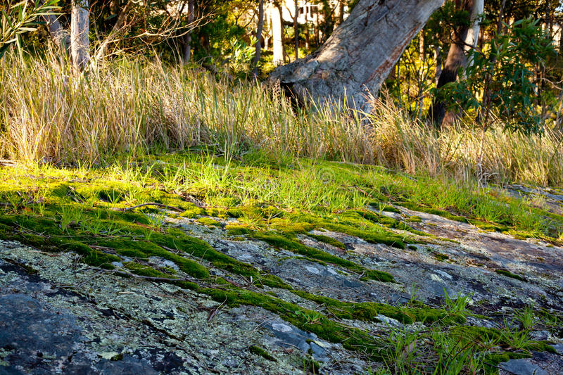 Green moss and grass growing on rocks royalty free stock images