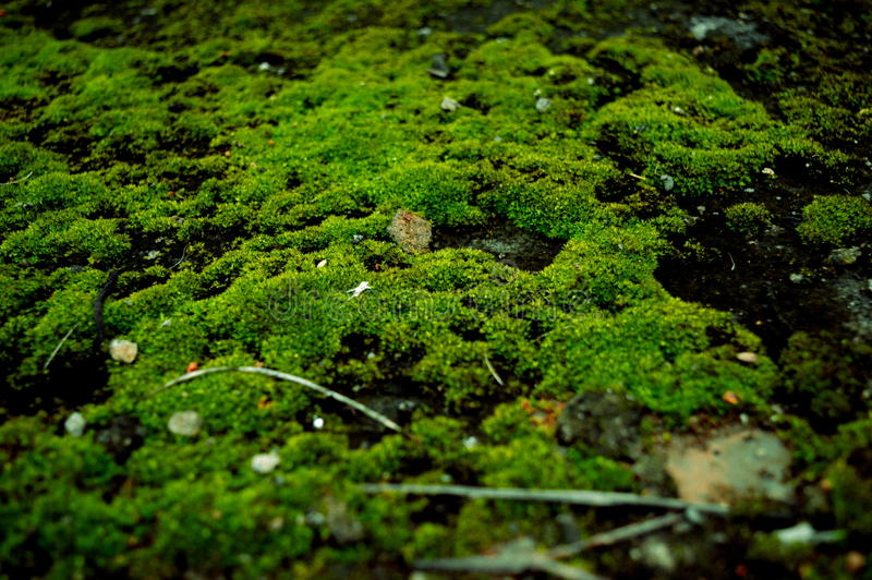 A green moss growth stock photos