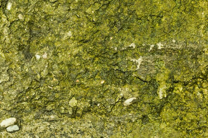 Green moss on grunge texture, background.  stock photo