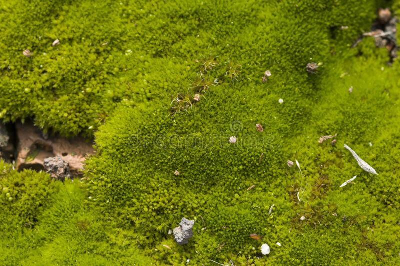 Green moss on grunge texture, background.  royalty free stock images