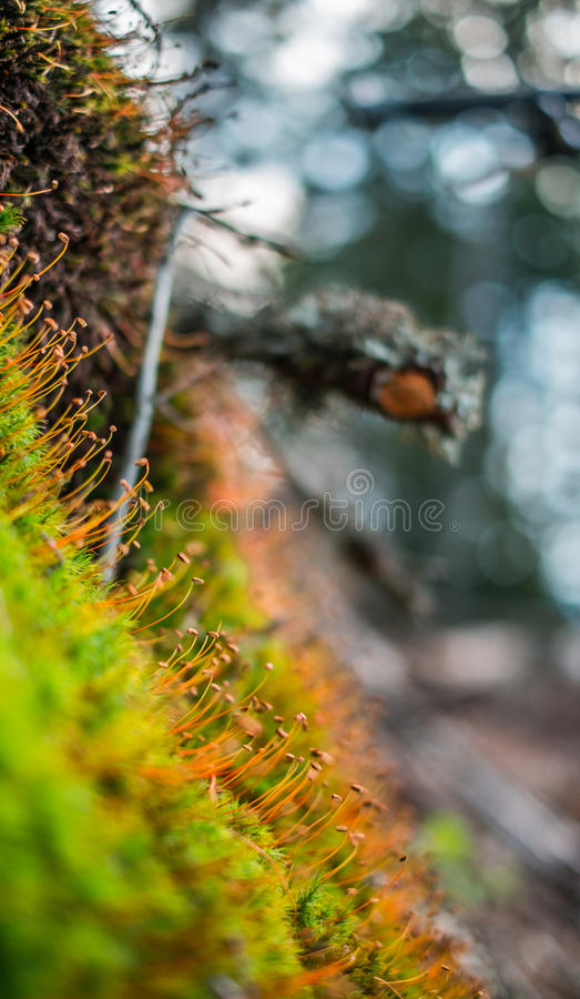 Green moss macro shot royalty free stock image