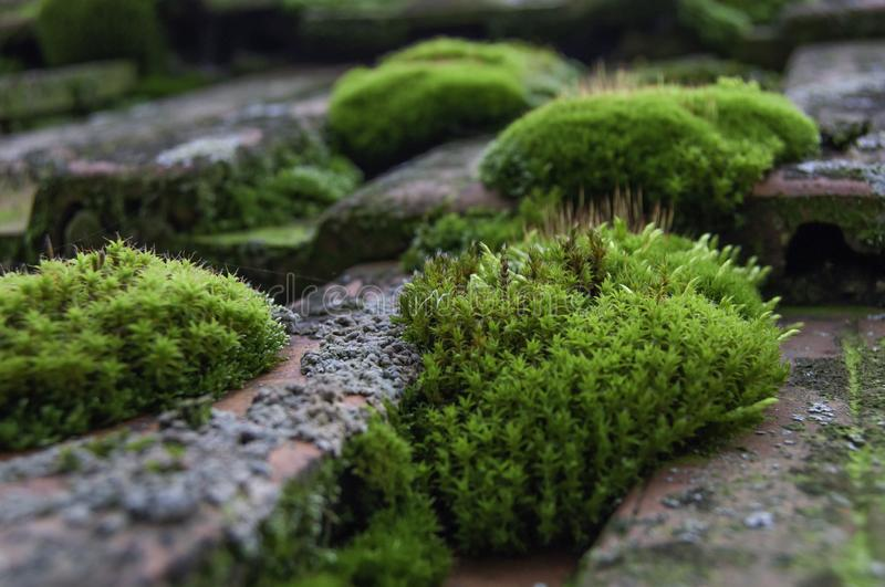 Green moss on the roof. Green moss on an old roof royalty free stock image