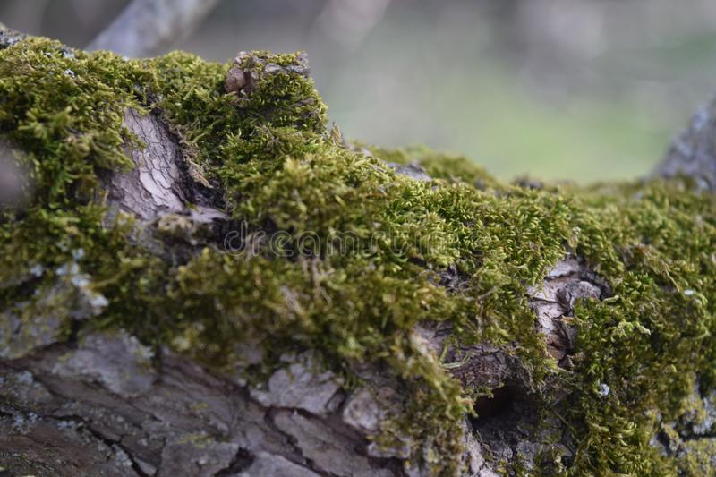 Green Moss Photo stock image