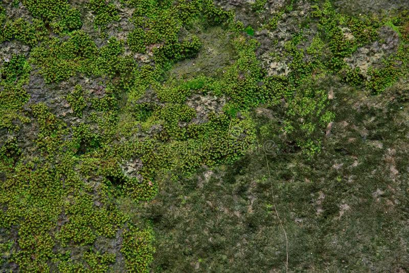 Texture and background. Green moss in red stone texture and background stock image
