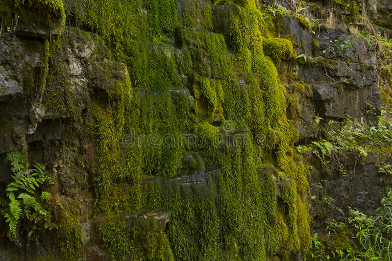 Green moss on rock wall - stock photo royalty free stock images