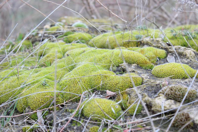 Green moss on the rocks. In the forest. Natural landscape royalty free stock photography