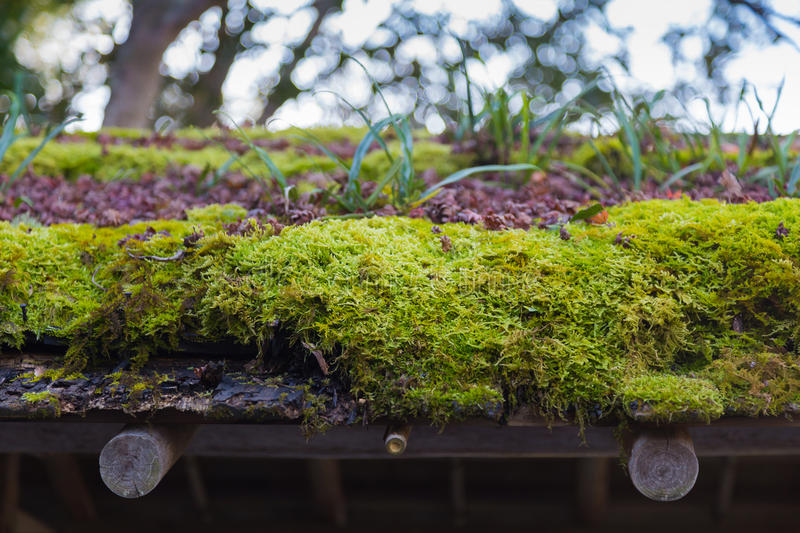 Green moss roof. Green moss on wooden roof top royalty free stock photography