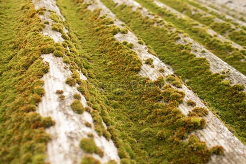 Green moss on slate. Closeup of moss stock photo