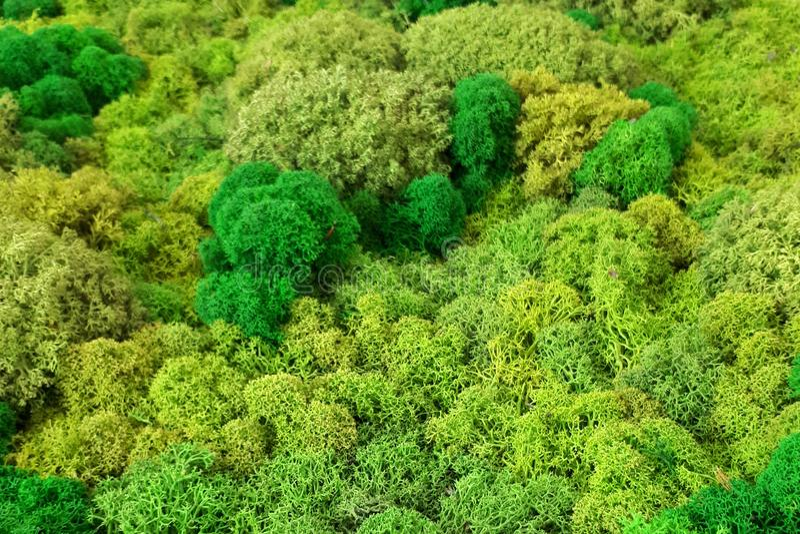 Green moss texture, backdround macro. Green moss texture, backdround closeup stock photo