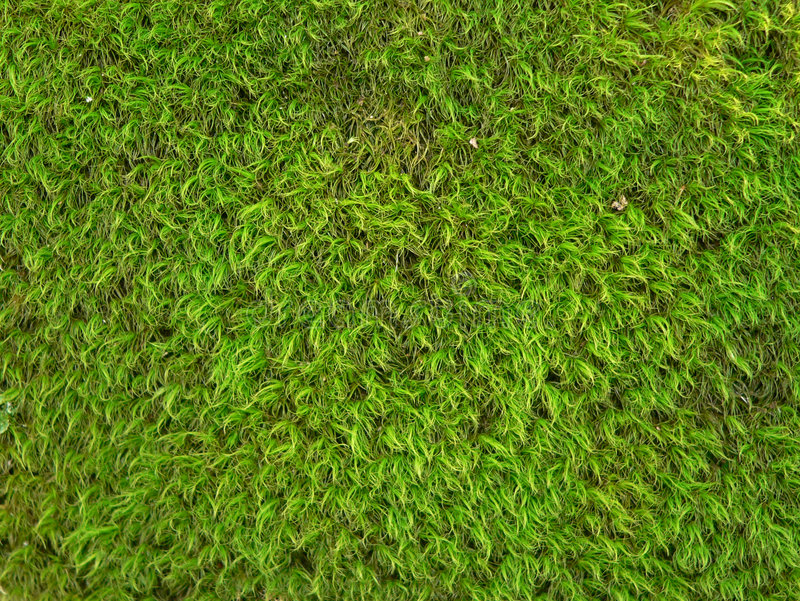 Download Green Moss Texture Background Stock Image - Image of background, green: 1714051