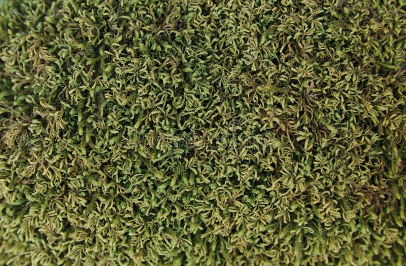 Green Moss Texture stock image