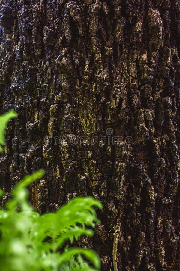 Green MOSS on tree bark in the rain forest. Abstract, aging, antique, autumn, background, beautiful, brown, close, close-up, closeup, color, cracked, design royalty free stock images