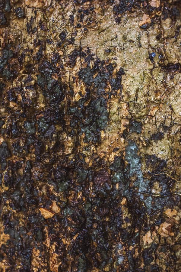 Green MOSS on tree bark in the rain forest. Abstract, aging, antique, autumn, background, beautiful, brown, close, close-up, closeup, color, cracked, design royalty free stock photos